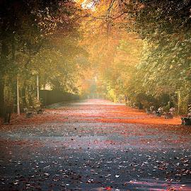 autumn by Cornelius D - City,  Street & Park  City Parks