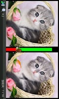 Screenshot of Find Diff-Cute Cat Album