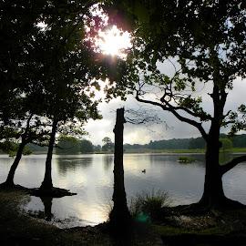 Early morning silence  by The Man in the Maze - City,  Street & Park  City Parks ( england, uk, london, richmond, pen pond )