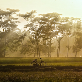 Morning bicycle by Bimo Pradityo - Transportation Bicycles ( field, trees, sunrise, morning, bicycle )