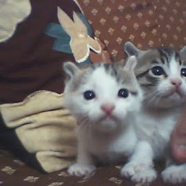 by Psy Cho - Animals - Cats Kittens