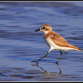 Walk like an egyptian by Yogesh Waikul - Animals Birds