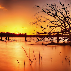 Firewater by Shawn Sanders - Landscapes Sunsets & Sunrises ( nature, waterscape, serenity, sunset, lake, se, glow, dead tree, golden hour )