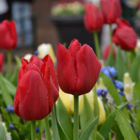 by Gobinathan Subramani - Flowers Flower Buds (  )