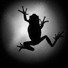 by Richard Stevens - Animals Amphibians