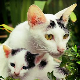 by Aswin Blinkerz - Animals - Cats Portraits