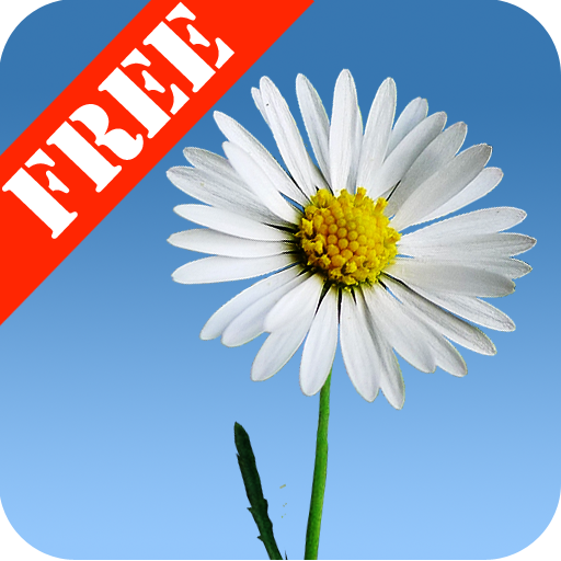 Lovely Daisies Free