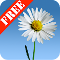 Lovely Daisies Free icon