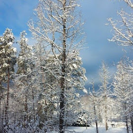 Beautiful snow by Tiffany Wilhelm - Instagram & Mobile Android
