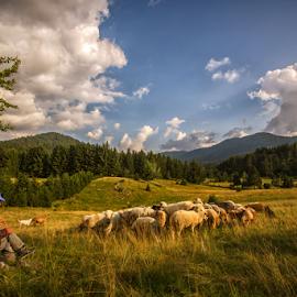 Taking a rest by Stanislav Horacek - Landscapes Prairies, Meadows & Fields
