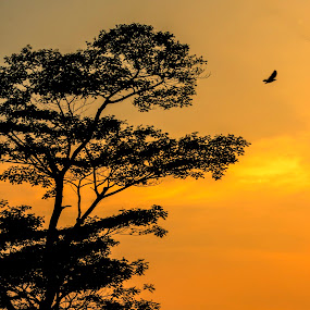 Dusk by Samaneethi Krishnan - Landscapes Sunsets & Sunrises ( canon, 50mm1.8, dusk, singapore, , silhouette )