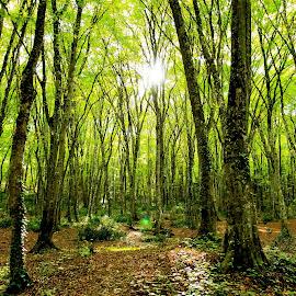 by Sveta Celik - Landscapes Forests