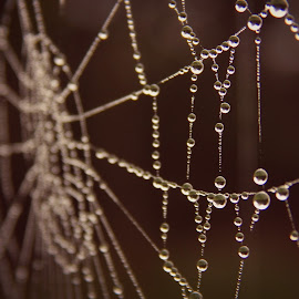 by Nenad Milic - Nature Up Close Webs