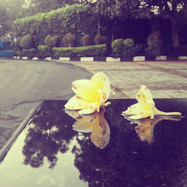 Yellow flower by Rully Kustiwa - Instagram & Mobile Instagram ( instagram, instagramindonesia, instafoto, djuraganutju, bogor, flower, yellow )