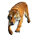 Tiger Sticker icon