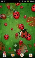 Screenshot of Ladybug Live Wallpaper