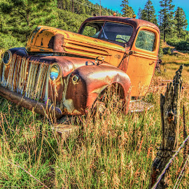 Pine River Rust by Nancy Young - Transportation Automobiles ( bayfield, 2014, truck, colorado, rusty, pine river, abandoned )