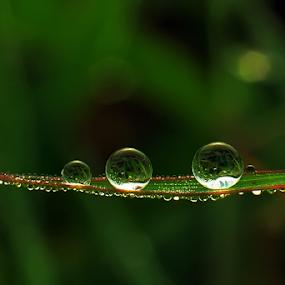5... by Kawan Santoso - Nature Up Close Natural Waterdrops