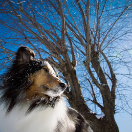 King of the hills  by Emilie Seney - Animals - Dogs Portraits