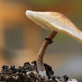 by Sirajuddin Halim - Nature Up Close Mushrooms & Fungi