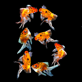 Goldfish B by Janna Morrison - Typography Single Letters ( b, fish )