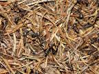 mravenců.