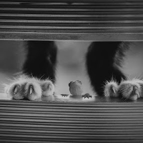 Between by Andi Halil - Black & White Animals ( cat, macro, foot, gecko, black and white,  )