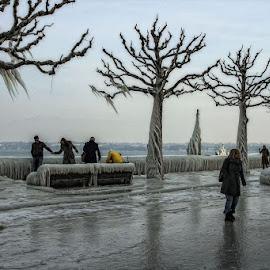 Icy wheather by Radu Eftimie - City,  Street & Park  Street Scenes ( versoix, frost, switzerland,  )