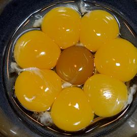 Sunflower Eggs by Patricia Kousaleos - Food & Drink Ingredients ( ingredients, eggs, food, yellow, flower )