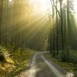 Illuminated path by Victor Mukherjee - Landscapes Travel ( nature, sunny, greenery, path, sunrays, trees, forest, road, sunlit, sun )