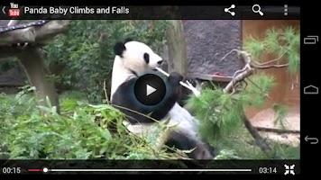 Screenshot of Animal Sounds Pics Videos Free