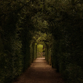 Marqueyssac Garden Hedges by Danielle Baron - City,  Street & Park  City Parks ( hedges, arches, cut, garden )