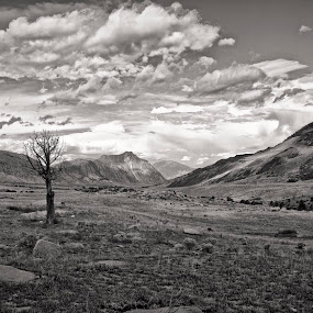 Death in Beauty  by Cody Hoagland - Landscapes Mountains & Hills ( mountains, tree, montana )