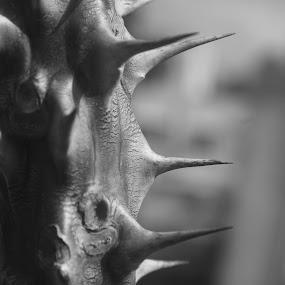 Dry thorns!! by Srivenkata Subramanian - Nature Up Close Gardens & Produce ( rose, macro, desert, black and white, thorns,  )