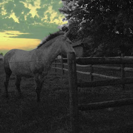 Timid Sunset  by Viktoria    Shawn  - Animals Horses