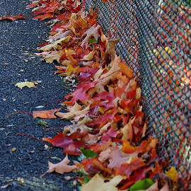 Autumn Trim by Alvin Simpson - City,  Street & Park  City Parks ( canon, fence, blacktop, autumn, colors, fall, leaves, rebel )