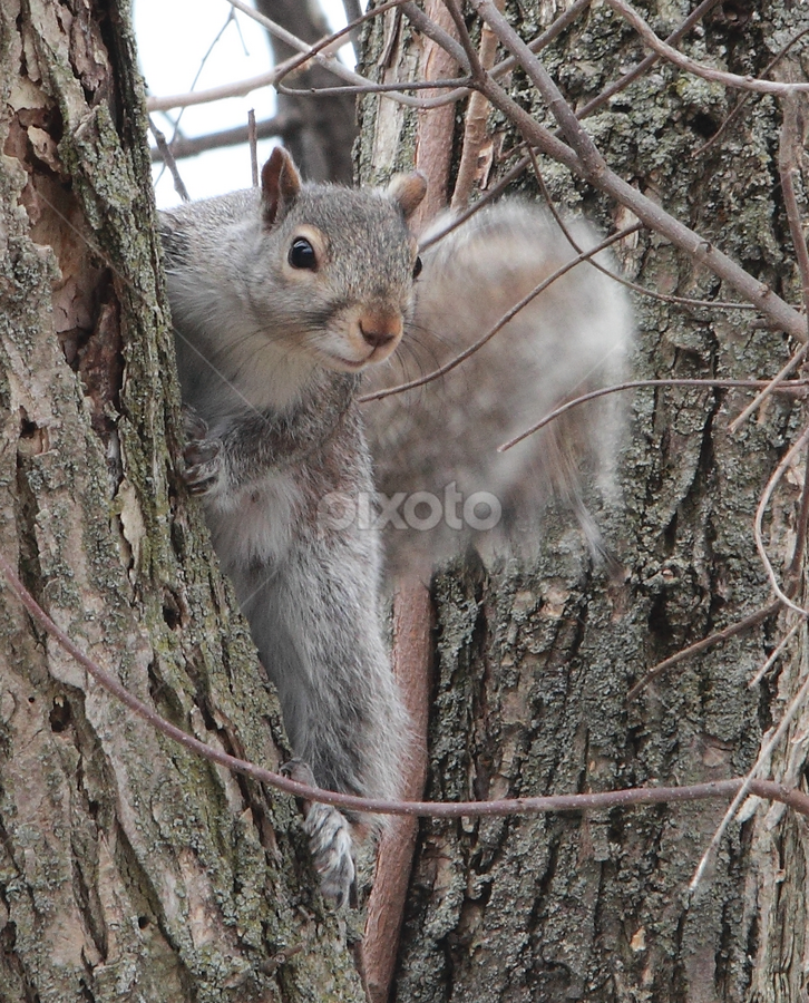 Squirrel  by Suann Vandewalker - Animals Other (  )