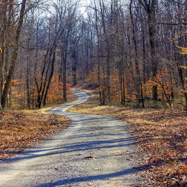 Wooded Path by Mark Six - Landscapes Forests ( winter, autumn, seasons, fall, path, road, landscape, woods,  )