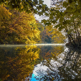 Fall Color by Spencer Hughes - Landscapes Forests ( reflection, fog, calmness, color, fall, lake, sunrise )