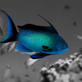 Avatar by Manu Schwingel - Animals Fish ( abstract, fish, sea, diving, portrait )