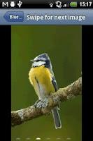 Screenshot of Birds Of Britain
