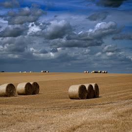 Alpacas redondas 25 by Eduardo Menendez Mejia - Landscapes Prairies, Meadows & Fields ( redondas, cambridgeshire, alpacas, menendez, eduardo, nikon, d5100, cambridge )
