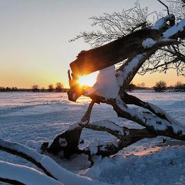 Winter Sunset by Glyn Thomas Jones - Landscapes Sunsets & Sunrises ( sunburst, sunset, snow, sundown, snowy, sunshine, sunlight, sunlit, sun rays, sun )