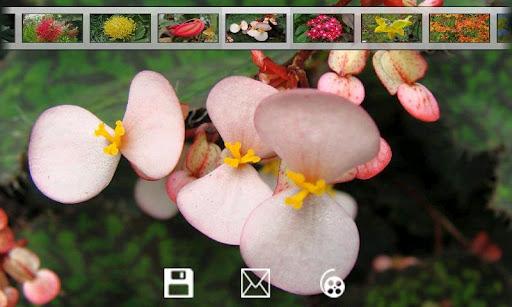 【免費攝影App】Flowers gallery-APP點子