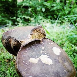 by Jody Rowe - Nature Up Close Mushrooms & Fungi