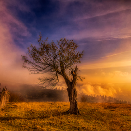 Morning sunrise glory by Robert Ungurianu - Landscapes Sunsets & Sunrises ( hill, tree, morning glory, morning sunrise, sunrise )