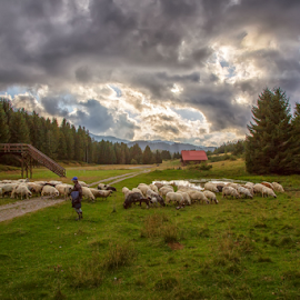 Going home by Stanislav Horacek - Landscapes Prairies, Meadows & Fields