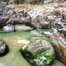 St Agnes, Cornwall by Joanna Holland - Nature Up Close Rock & Stone