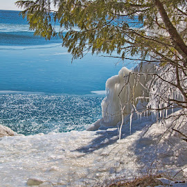 Icy Waters by John Kehoe - Landscapes Weather ( michigan, wisconsin, sturgeon, tree, bay, ice, formations, lake, icicle, frozen,  )