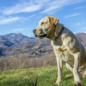 sentinel by Giovanni De Bellis - Animals - Dogs Portraits ( clouds, mountains, gastone, landscape, dog, #GARYFONGPETS, #SHOWUSYOURPETS )